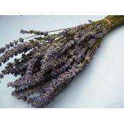 Country Garden - Bunch of Dried Lavender